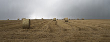 Panoramic Shot Of Hay Bales In Field