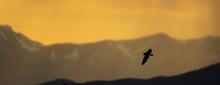 Bright, Yellow Sunset At Camus...