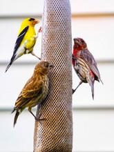 Close-up Of Birds On Feeder