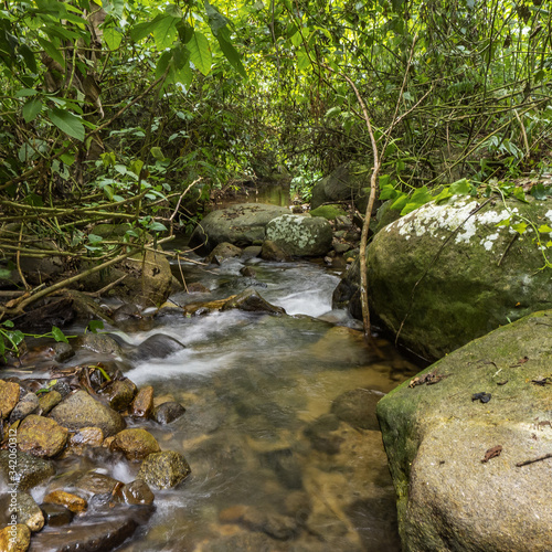 Fototapety, obrazy: river in the forest II