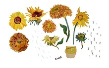 Set Hand Drawn Sunflower Flowers On A White Background. Vector Illustration, Pattern Based On The Oil Painting Of Van Gogh. All Object In  Isolated