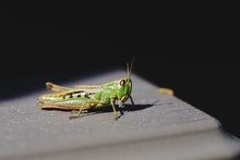 Grasshopper On Table During Sunny Day
