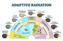 Adaptive Radiation Vector Illu...
