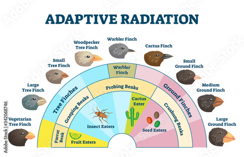 Photographie Adaptive radiation vector illustration