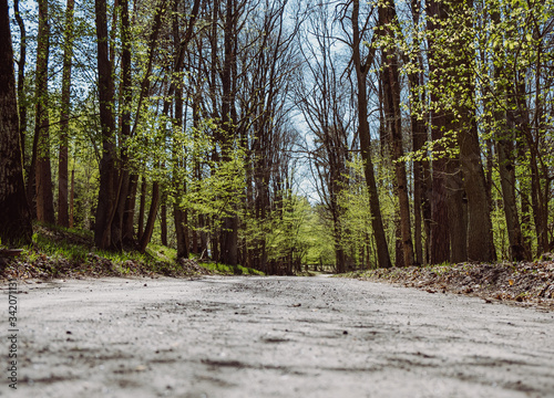 Fototapeta Forest gravel road, convergent perspective