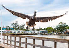 Brown Pelican Flying From Brad...