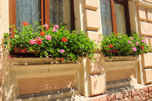 Decorating House Exterior With Bloom And Greenery By Installing Beautiful Window Flower Garden, Window Box With Blooming Pelargonium, Geranium Plants With Red, Pink And Orange Flowers.