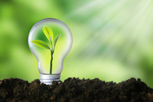 Renewable Energy, Sustainability, Ecology Concept. Light Bulb With Green Plant Inside Over Green Background