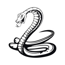 Sketch Black Mamba. Teeth Bared, Ready To Strike. Black Snake. Poisonous Snake Common In Africa. Black Coloring Of The Internal Cavity Of The Mouth. Logo For Sport Team. Snake Mascot.