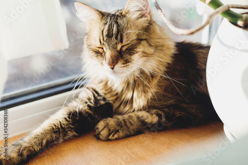 Photo Cute tabby cat lying on wooden window sill in warm sunny light and relaxing