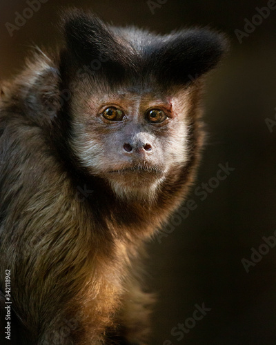Capuchin Fototapet