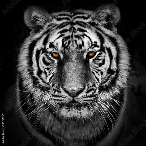 Canvas Closeup head shot of a tiger