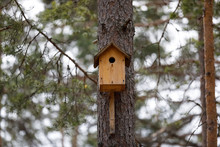 A Birdhouse On A Tree Branch Pine Forest