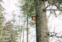 A Birdhouse On A Tree. A Birdhouse Attached To The Trunk Of A Large Spruce