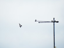 Low Angle View Of Birds On Television Aerial Against Clear Sky