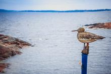 Wooden Gull Sits On A Pillar A...