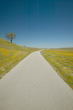A Lone Tree On The Side Of The Road Surrounded By Spring Flowers, Off Of Old Route 58 In California, Shell Creek Road