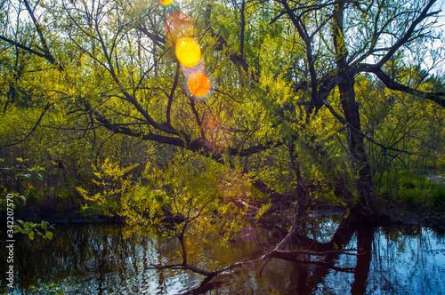 Fotografia, Obraz Curtis Park Hudson River Corinth Upstate New York Adirondacks