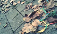Autumnal Leaves On The Ground
