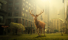 View Of Deer In A Dead City, D...