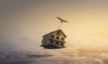 The Bird Flies With His House