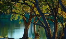 Trees Growing By Lake