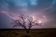 Lone tree silhouetted by lightning bolt during storm.