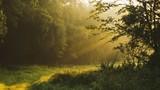 Fototapeta Las - Plants Growing On Field In Forest