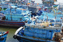 Colorful Fishing Fleet In Da N...