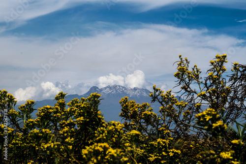 Fototapeta Shrubbery Against Mountains