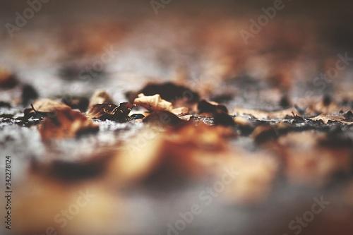 Obraz na plátně Close-up Of Dry Fallen Leaves