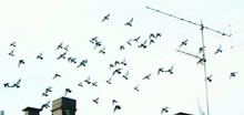 Low Angle View Of Birds Flying By Television Aerial Against Sky