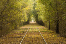 Railroad Track Amidst Trees In...