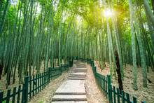 Sunshine Bamboo Forest And Path