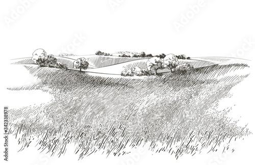 Vector sketch Green grass field on small hills Wallpaper Mural