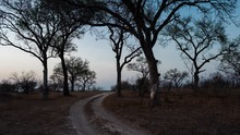 Dawn/Early Morning Sunrise Timelapse, Static, Of A Winding Dirt/gravel Road Through The Wilderness Bushveld, Landscape With Trees In South Africa, Game Reserve/national Park.