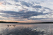 flock of loons swim in the lake at sunset