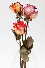 Bouquet Of Dried Roses On Whit...