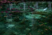 綺麗な池を泳ぐ魚