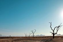 Dead Trees On Field Against Blue Sky In Desert