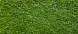 grüne Hecke