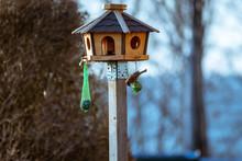 Spatz Am Vogelhaus