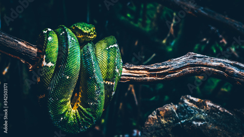 Fotografia Close-up Of Green Snake On Tree