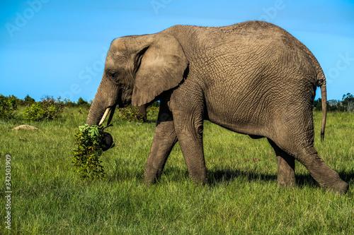 Knysna Elephant Park, South Africa Canvas Print