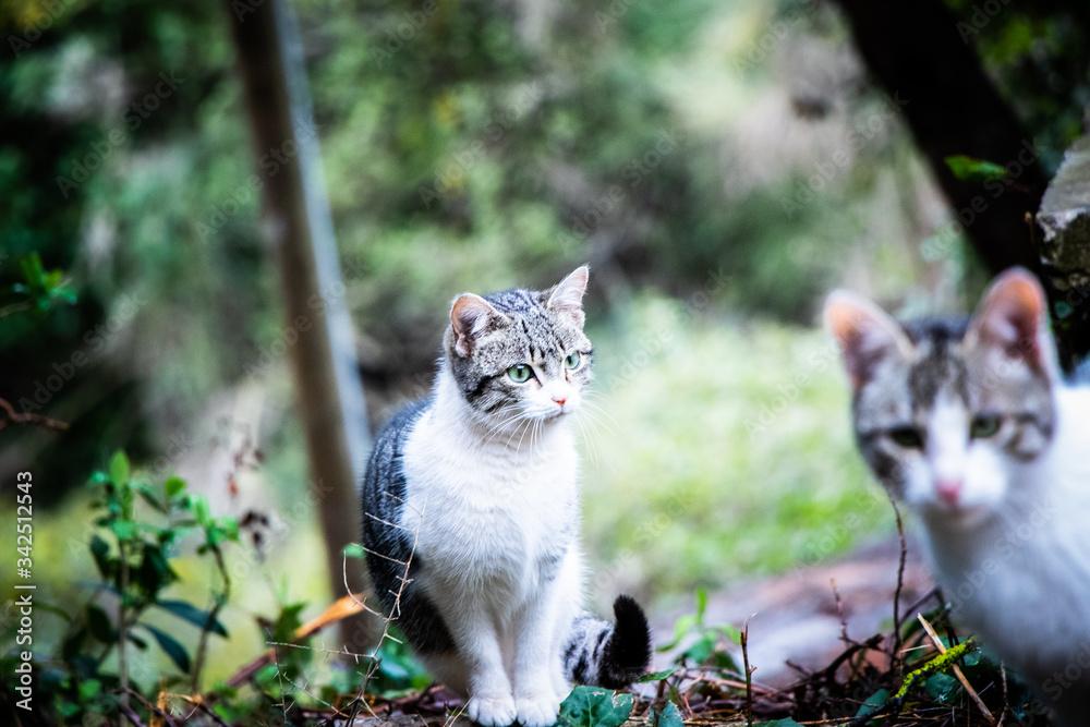 Fototapeta Hermanos felinos