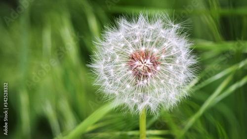 Dmuchawiec latawiec zielony  - 342528332