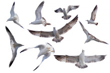 Nine Actions Of  Birds Flying ...