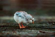 Little Bird On The Ground