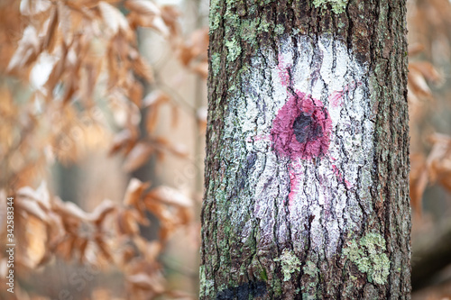 Painted faces on tree trunks in forest Fototapet