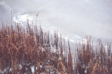 High Angle View Of Plants At Lakeshore During Winter